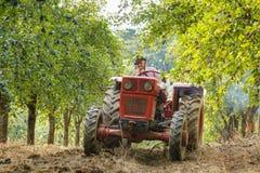 Stary rolnik zbiera śliwki z ciągnikiem Obrazy Royalty Free