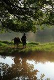Stary rolnika prowadzenie bydło pod antycznym banyan drzewem obrazy royalty free