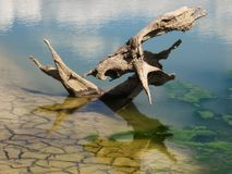 Stary rooten korzeń Zdjęcie Stock