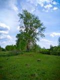 Stary samotny drzewo naprzeciw pola zdjęcia stock