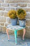 Stary stół z więdnąć roślinami Zdjęcie Stock