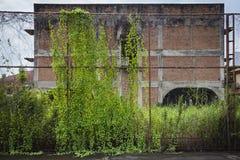 Stary stali ogrodzenie zakrywający z bluszczem przed pustkowie domem Obrazy Royalty Free