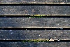 Stary surowy drewno, drewniana tekstura z mech Obraz Royalty Free