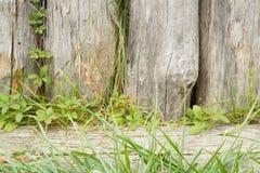 Stary surowy notuje dalej wystrój park Obraz Stock