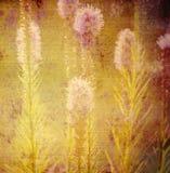 Stary tło, kwiaty łąka Zdjęcia Stock