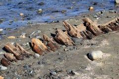 Stary, tajemniczy shipwreck wykopujący po burzy, Krótcy piaski Wyrzucać na brzeg, Maine, 2018 zdjęcie stock