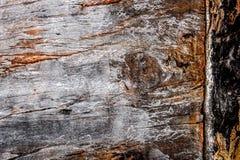stary tekstury drewna zdjęcie royalty free