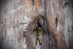 stary tekstury drewna tło zdjęcie stock