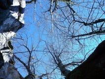 Stary wapna drzewo w Austria zdjęcie stock
