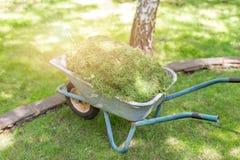 Stary wheelbarrow w pełni ładował z skoszonym na zielonej łące po tnącego gazonu w ogródzie Cleaning I ogrodnictwo obraz royalty free