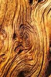 Stary Wietrzejący drewno zdjęcie stock