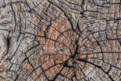 Stary Wietrzejący Krakingowy Drewniany Crosstie przekroju poprzecznego powierzchni tekst Fotografia Royalty Free
