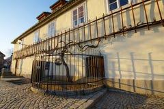 Stary winograd dalej Pożyczający w Maribor Zdjęcia Stock