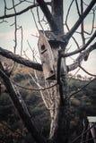 Stary zaniechany birdhouse Fotografia Stock