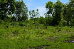 Stary zaniechany cmentarz, krzyże i grób przerastający z tal, fotografia stock