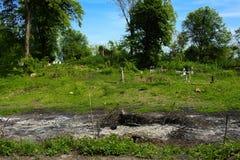 Stary zaniechany cmentarz, krzyże i grób przerastający z tal, fotografia royalty free