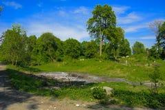 Stary zaniechany cmentarz, krzyże i grób przerastający z tal, zdjęcia royalty free