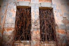 Stary zaniechany dwór z porosłymi okno obrazy royalty free