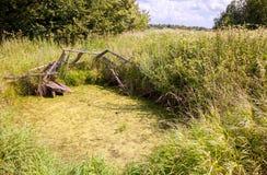 Stary zaniechany przerastający wioska staw w lecie fotografia stock