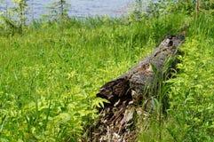 Stary zawalony w zielonej trawie i Zdjęcie Stock
