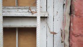 Stary zdewastowany budynek z przybijający w górę zakurzonego kraciastego okno zakrywającego z pajęczyną zbiory