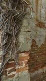 Stary zdewastowany zaniechany palący puszka dom w Pólnocna Karolina fotografia royalty free