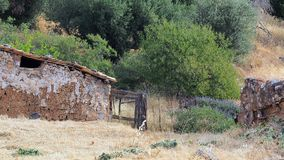 Stary Zwierzęcy pióro, Grecka wioska Obraz Royalty Free