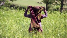 Starzeć się kobiety na pszenicznym polu zdjęcie wideo