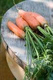 starzeć się marchewki uprawiają ogródek starego nadmiernego stołowego drewno Obrazy Royalty Free