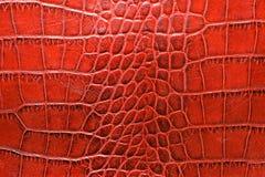 Starzejąca się aligator skóra w czerwonego koloru brzmienia zakończeniu up zdjęcia stock