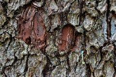 Starzejąca się będąca ubranym drzewna barkentyna zamknięta w górę małego mech z obraz royalty free