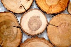 Starzejąca się, pękająca, drewniana, kółkowa drzewna sekcja z pierścionkami, obraz stock