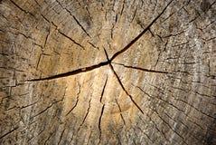 starzejący się drewno Zdjęcie Royalty Free