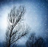Starzejący się drzewo w zimie obraz royalty free