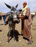 Starzy człowiecy i jego osioł parkujący w souk miasto Rissani w Maroko Zdjęcie Royalty Free
