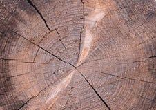 Starzy Drewniani Drzewni pierścionki Texture-8 obrazy stock