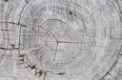 Starzy drewniani drzewni tnący bagażników tła, naturalnego drzewnego pierścionku rżniętego fiszorka drewniana tekstura i szalunkó obraz royalty free