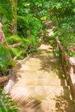 Starzy drewniani kroki prowadzi up Obrazy Stock