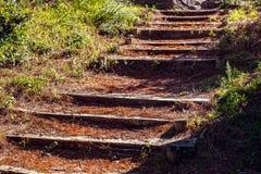 Starzy drewniani schodki przez lasu zdjęcia stock