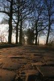starzy drogowi drzewa Zdjęcia Royalty Free