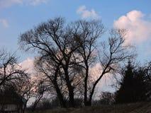 Starzy drzewa i piękny chmurny niebo, Lithuania Zdjęcie Royalty Free