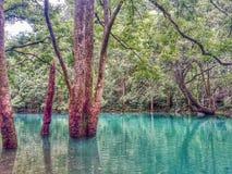 Starzy drzewa r w wodzie, Libo zdjęcia stock