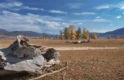 Starzy drzewni bagażniki kłama na tle jesień krajobraz Zdjęcia Royalty Free