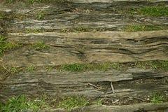 Starzy drzewni bagażniki kłama na ziemi Zdjęcia Royalty Free
