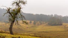 Starzy drzewo stojaki na krawędzi pola zdjęcie royalty free