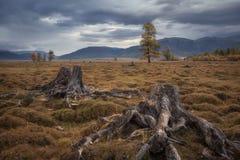 Starzy fiszorki na tle ponury jesień krajobraz Obraz Stock