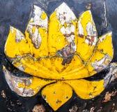 Starzy lotosowi kwiaty zdjęcie stock