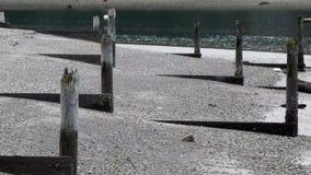Starzy palowania wzrasta od piaska z światłem i cieniem zdjęcie wideo