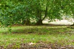 Starzy piękni drewna Zdjęcie Royalty Free