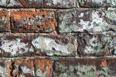 Starzy podławi ściana z cegieł dla tła Obraz Stock